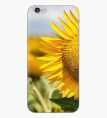 Sunflower - Nobby, Australia iPhone Case