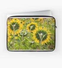 Sunflower Backs - Nobby, Australia Laptop Sleeve