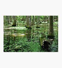 Lake Chicot Photographic Print
