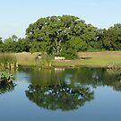 Reflection of a Texas Oak Tree  by Jack McCabe