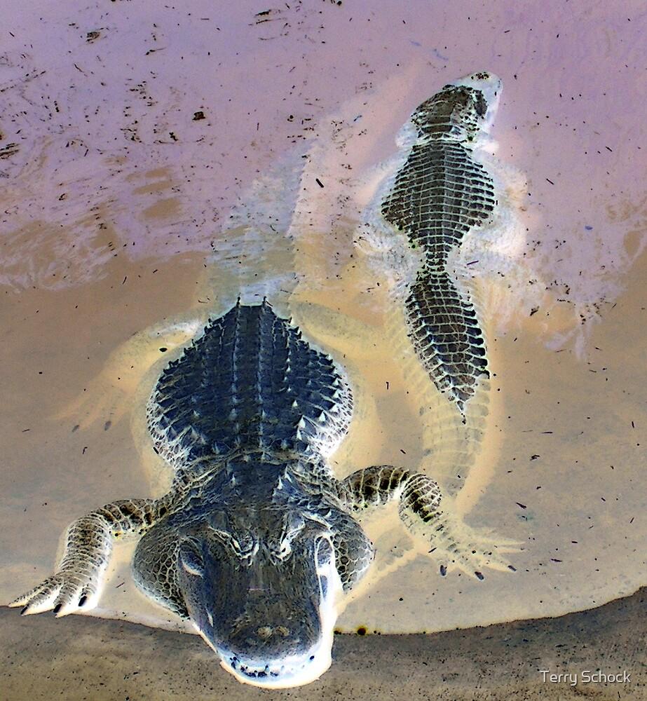 Glaring Gator by Terry Schock