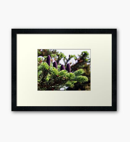 A New Generation Framed Print