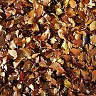 Carpet of Autumn Leaves by SiobhanFraser