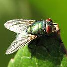 fly by tabusoro