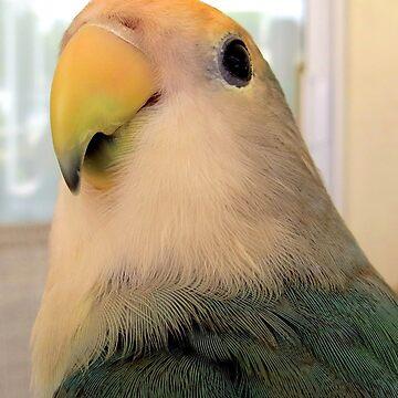 I'm a Handsome Bird! by AuntDot