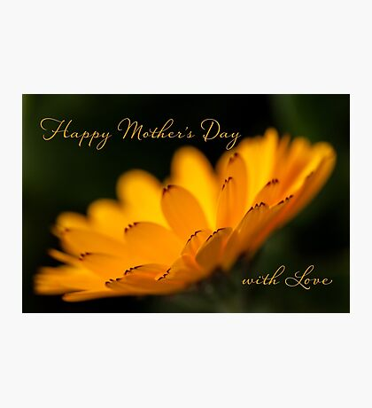 Calendula aglow - Mother's Day Photographic Print