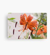 Tiger Lily 1 Canvas Print