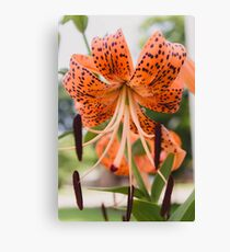 Tiger Lily 2 Canvas Print