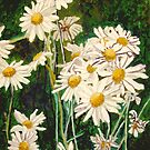 Flock of Daisies by Jim Phillips