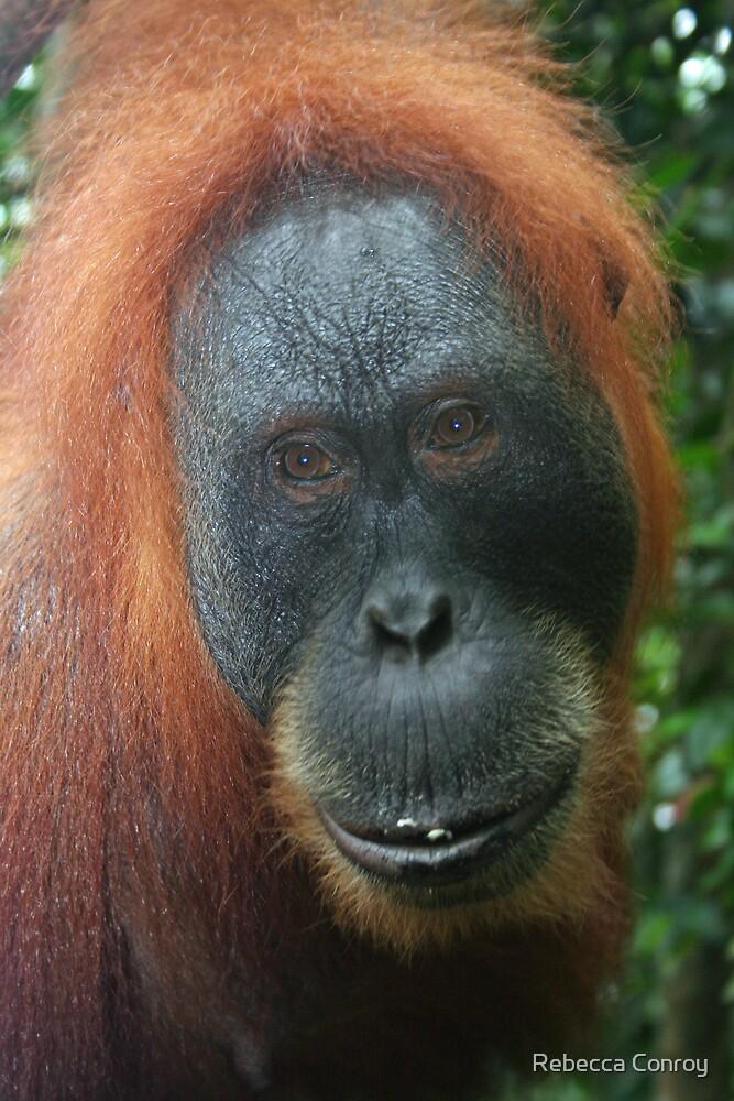 Mother Orangutan by Rebecca Conroy