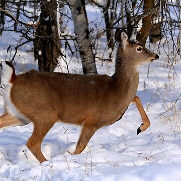 WHITETAIL DOE ON THE MOVE... by umpa1