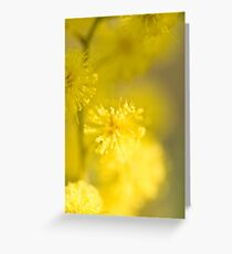 Mimosa Greeting Card