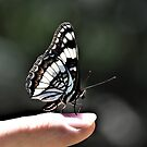 Butterfly On Jay's Finger by Len Bomba