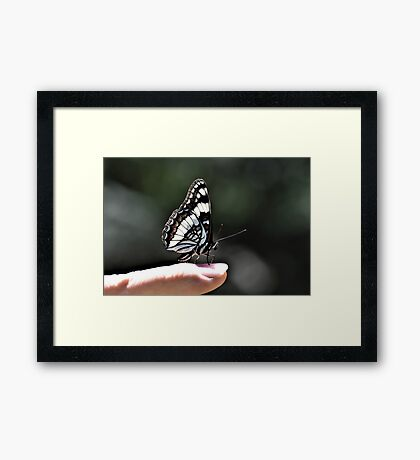 Butterfly On Jay's Finger Framed Print