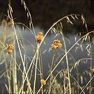 Grass by sonjas