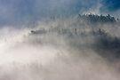 Morning mist by David Clarke