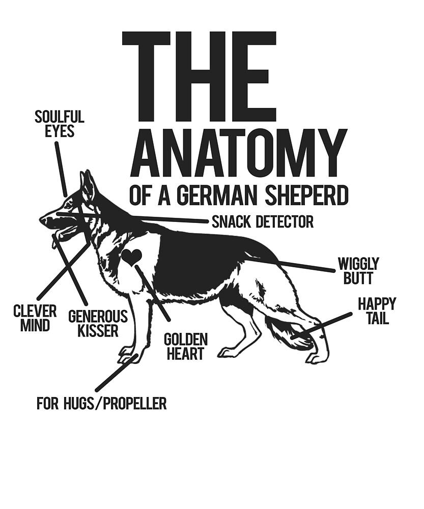 The Anatomy of German Shepherds\' Lovely Pet Dog\