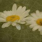 Rustic Daisies by TingyWende