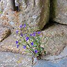 Flowers In Church by lezvee