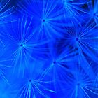 Cosmic Blue Dandelion by Michael Matthews