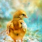 Little chick by PhotoAmbiance