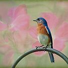 Bluebird & Roses by Bonnie T.  Barry