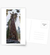 General Sherman Postcards