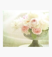 Old fashioned roses Photographic Print