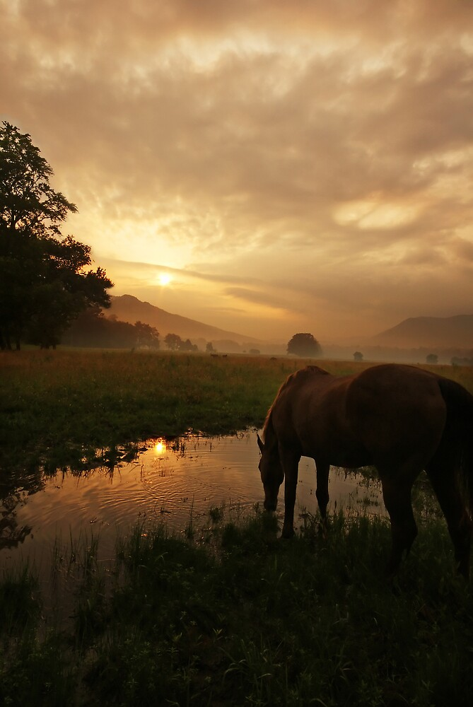 Sunrise in Cades Cove by Deb Campbell