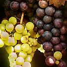 Fruit of the Vine by browncardinal8