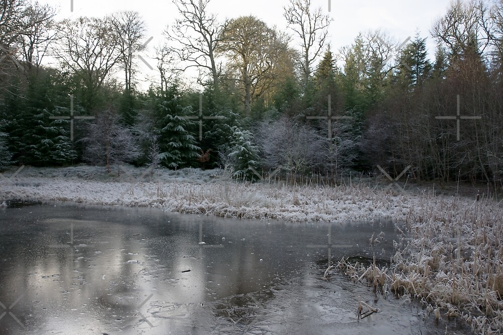 The Secret Woodland Pond in Winter by SiobhanFraser