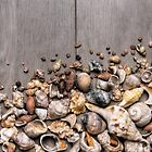 Conchs and Shells over wodden surface by ccaetano