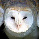 Barn Owl - I See You by Jo Nijenhuis