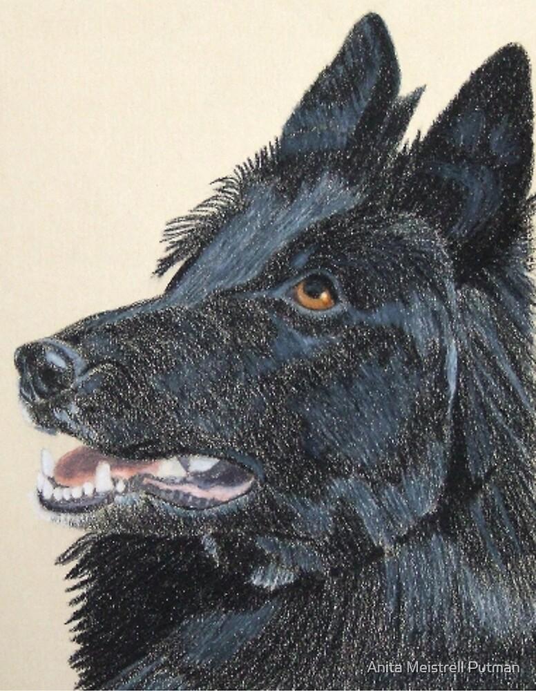 Belgian Shepherd Vignette by Anita Putman