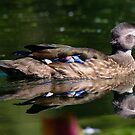 Reflection Duck by Amber D Hathaway Photography