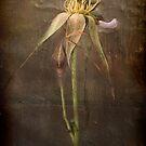 Rust 'n Roses ~ #7 by Rosalie Dale