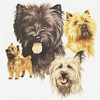 Cairn Terrier by BarbBarcikKeith