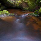 Upper Toorongo River by Travis Easton