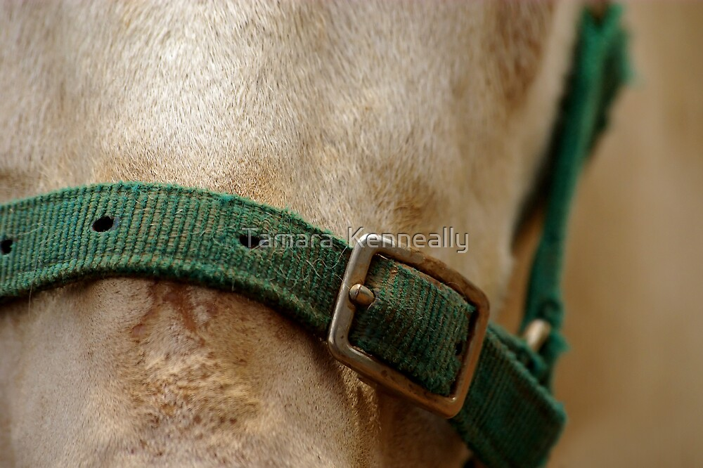 Donkey by Tamara  Kenneally