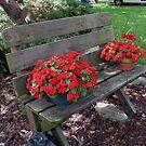 Flower My Bench by Linda Miller Gesualdo