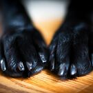 Black Paws by Kim  kimkWIDMARK