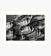 Threadfin Pearl Perch Art Print