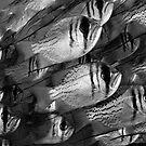 Threadfin Pearl Perch by Ross Gudgeon