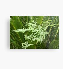 Palm with lacy fern Metal Print