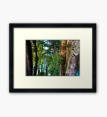 Beach Trees and Abel Tasman Framed Print