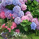 Glorious Hydrangea Bush  by Heather Friedman