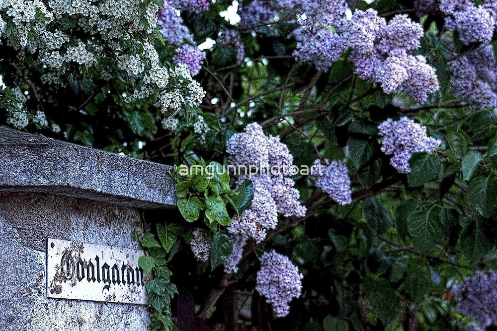 Odalgatan Lilacs by amgunnphotoart