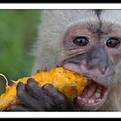 The Proper Way to Eat a Mango by Jase036