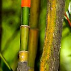 Bamboo colours - Singapore by indiafrank
