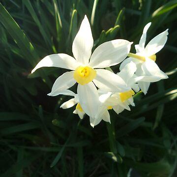 Daffodils by mauriandbrio